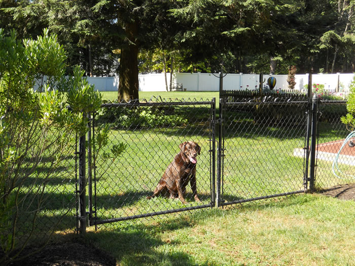 Pet Containment Fence Seacoast Nh Platinum Fence